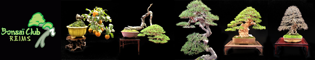 Bonsai Club de Reims